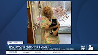 Pets up for adoption at the Baltimore Humane Society