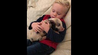 Little boy loves his new pet mini pig