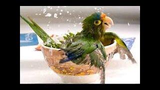 Cute moment of parrots.