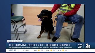 """The Humane Society of Harford County says """"We're Open Baltimore!"""""""