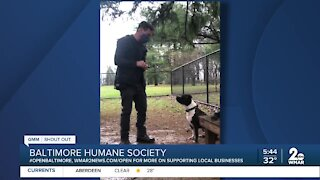 """The Baltimore Humane Society says """"We're Open Baltimore!"""""""