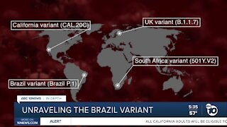 In Depth: What we know about the Brazil Variant