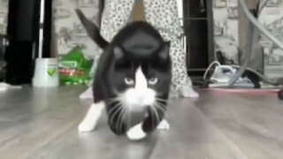 Cat jumping in style!!