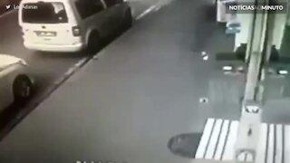 Momento bizarro em que gato ataca cão e sua dona
