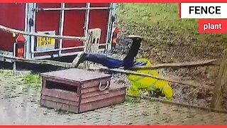 Hilarious video shows man falling head first over a wooden fence