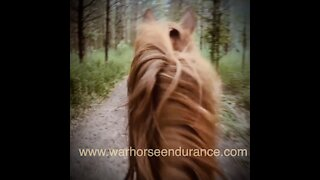 WARHORSE Endurance Conditioning Challenges