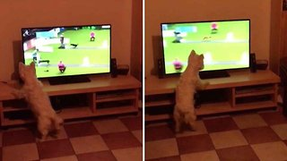 Cute Dog Goes Crazy Over Crufts Fly-Ball Game