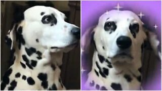 Denna hund vet precis hur man poserar på Instagram
