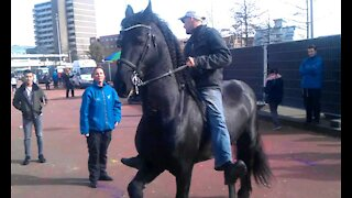 Black horse shows off at diwali party