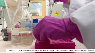 UMD researchers begin experimental testing for potential COVID-19 vaccine
