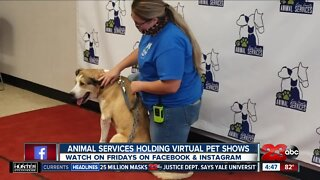 Adoptable pets walk the red carpet during Animal Services virtual pet shows