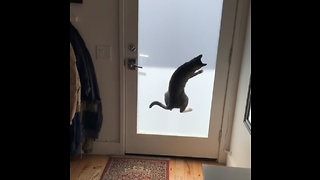 Henry the Dancing Cat