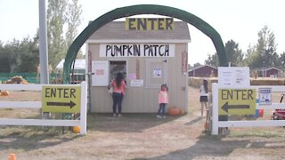 Discover Colorado's Cottonwood Farms, aka 'pumpkin patch' to generations of kids