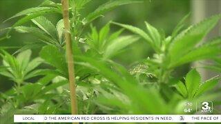 Nebraska lawmakers fail to advance medical marijuana bill
