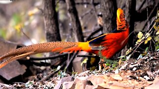 The most beautiful colored flower bird in the world