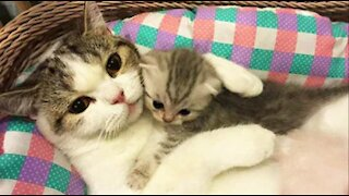 Funny Cats to Change your Mind