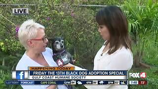 Gulf Coast Humane Society adoption special