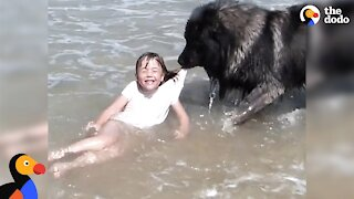 Watch: Hero dog saves his little girl from falling in the ocean