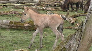A wonderful meeting with a young wild foal