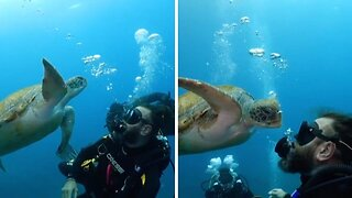 INCREDIBLE MOMENT SEA TURTLE MUNCHES ON SCUBA DIVER'S BUBBLES MISTAKING THEM FOR JELLYFISH