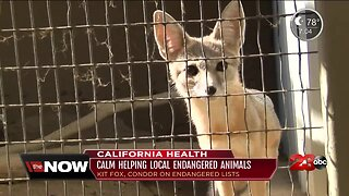 California Health: CALM helping Kern County endangered species at their zoo
