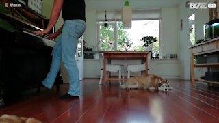 Un cane e il padrone cantano una canzone dei Linkin Park