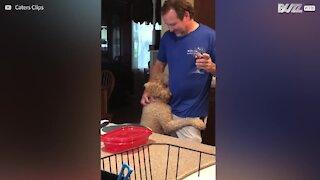 Cagnolina adora abbracciare i suoi esseri umani