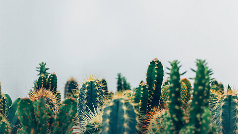 Why Cactuses and Succulents are Taking Over the World