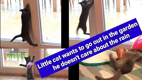 Little cat wants to go out in the garden, he doesn't care about the rain