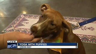 Gather on Broadway hosts yoga with puppies