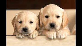DOG and PUPPIES / bonding