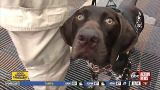 Meet the 10 dogs at Tampa International Airport keeping you safe