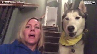 Husky dice 'I love you' alla padrona