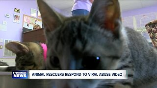 Animal rescuers respond to viral abuse video