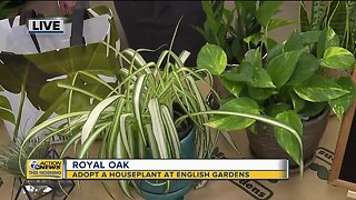 Adopt A House Plant