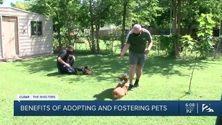 Benefits of adopting and fostering pets