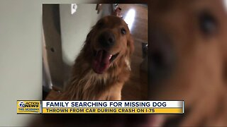 Family searching for missing dog thrown from car during crash on I-75