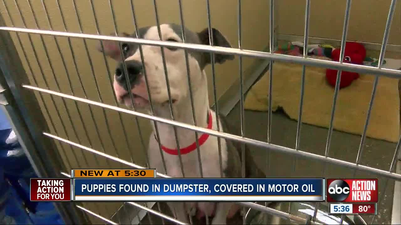 2 puppies found in Zephyrhills dumpster covered in motor oil find loving homes