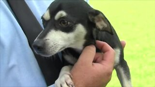 Getting your pets ready for hurricane season in South Florida
