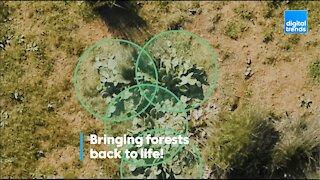 Bringing forests back to life!