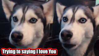 Dog saying I love you - You have never seen before