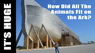 Noah's Ark: How Could So Many Animals Fit?