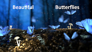 Beautiful Butterfly & Nature