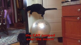 Leaping cat jumps over nursery rhymes