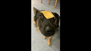 Cheese Slice Sends Pup Into Hilarious Freeze State