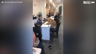 Il cane che vuole a tutti i costi una pedicure!