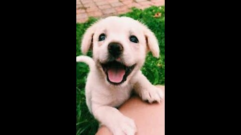 Cute And Funny puppy& Dogs Compilation