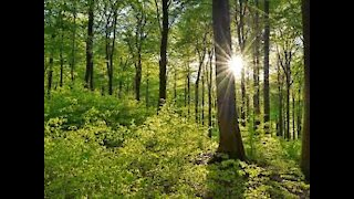 relaxing scenery of green forest with relaxing calm piano music