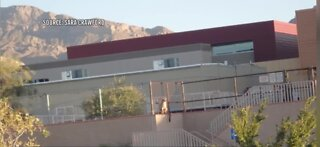 Mountain lion seen in Las Vegas neighborhood