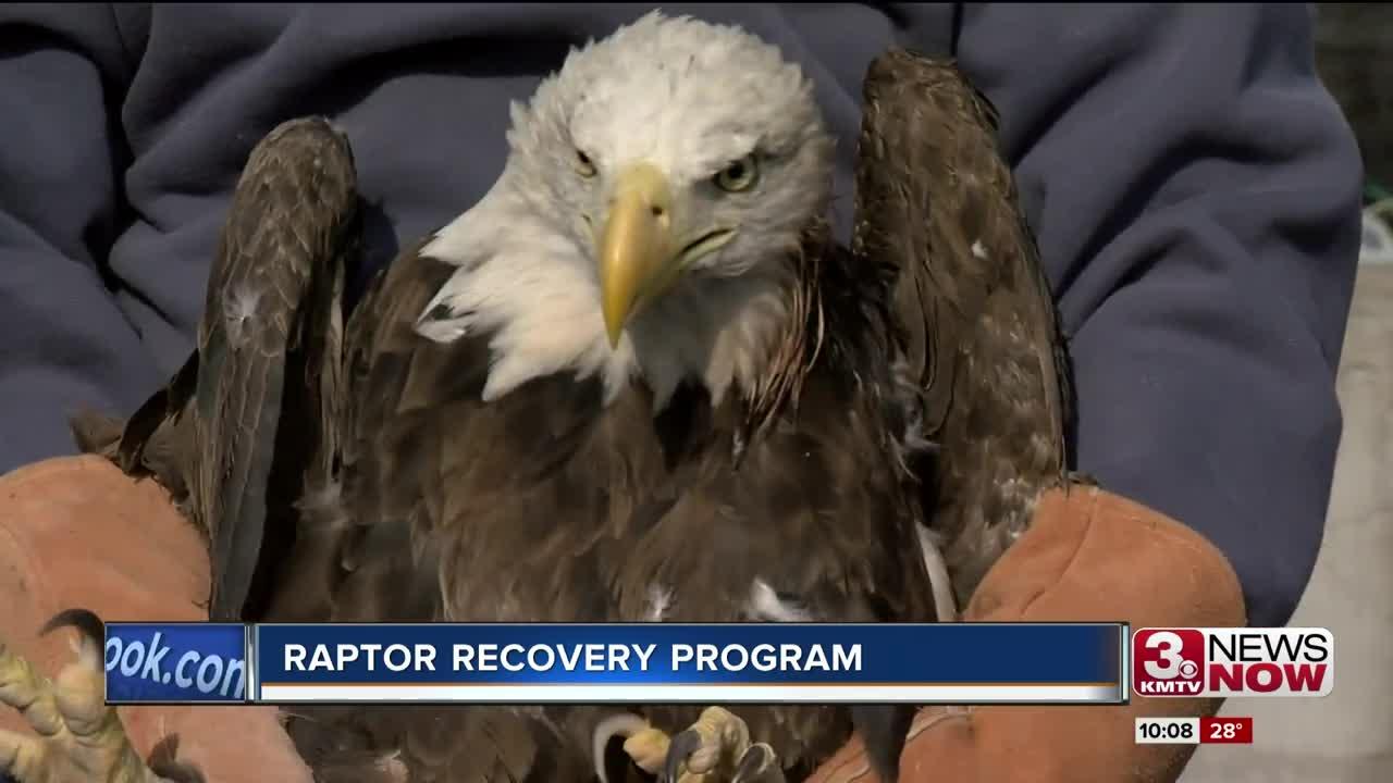 Raptor Recovery Program